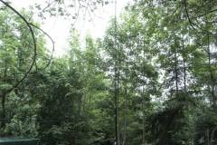 KW-Antenne
